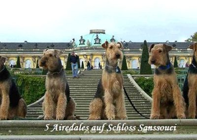 5Airedales