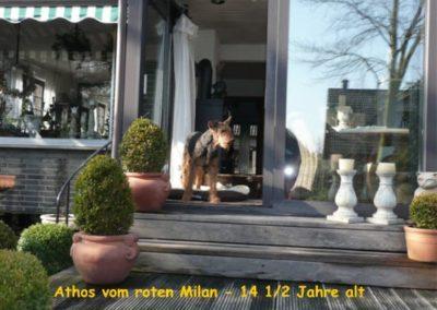 Athos vom roten Milan 14 5J
