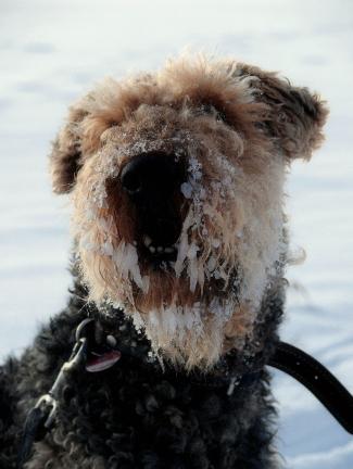 Charly_Frozen_dog__2_