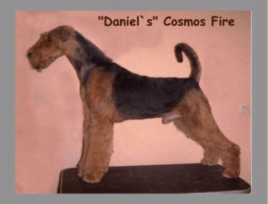 Cosmos_Fire_Daniels1