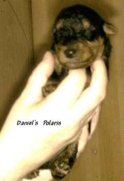 Daniels_Polaris1