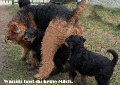 ErfurtherHofB-wurf00 (2)