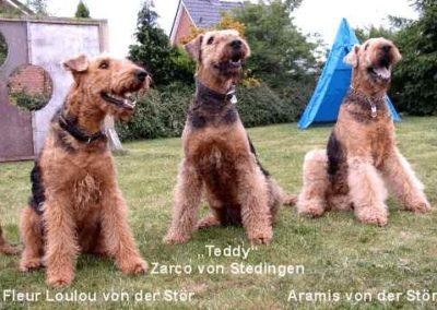 Loulou_Teddy_und_Ari