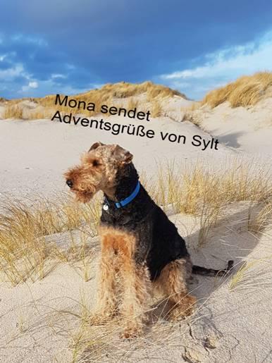 MonaSylt1_051217a
