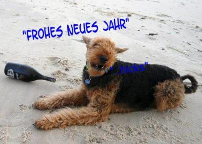 ProNeuesJahrMona (2)