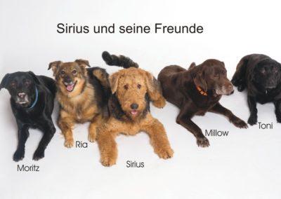 Sirius_und_Freunde