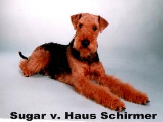 Sugar_Haus_Schirmer