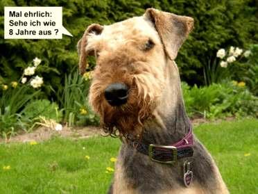 Teddy_frisch_frisiert