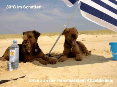 Teddy_und_Loulou_am_Strand