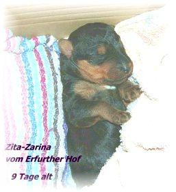 Zita_ErfurtherHof4