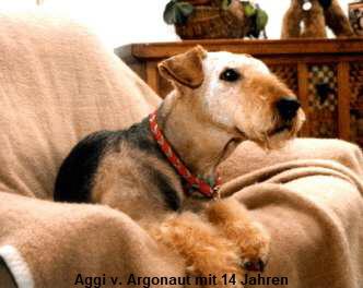 a_Aggi_14