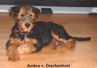 a_Ambra_Drachenhort2