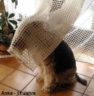 a_Anka1
