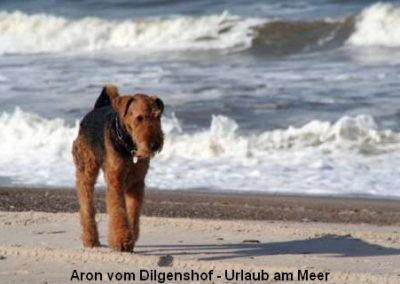 a_Aron_vom_Dilgenshof1