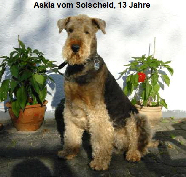 a_Askia_Solscheid1