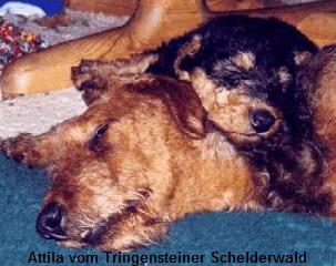 a_Attila_Tringensteiner_Schelderwald1