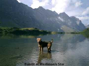 a_Bandit_WedimansStar