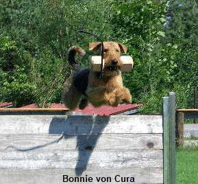 a_Bonnie_Cura1
