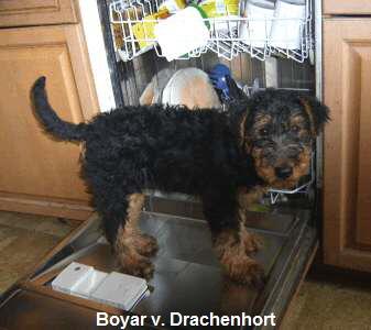 a_Boyar_vom_Drachenhort2