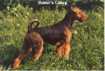 a_Busters_Casey