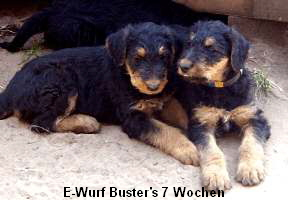 a_Busters_E-Wurf