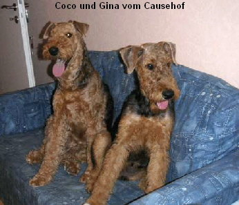a_Coco_Gina_Causehof1