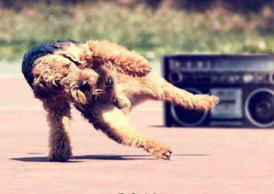 a_Dog-Dancing