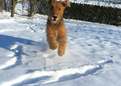 a_Duke_im_Schnee