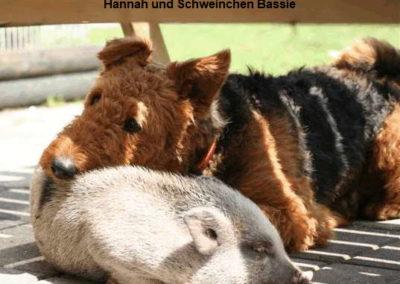 a_Hannah_Schwein1