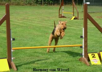 a_Harmony_Wissel66__2_