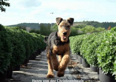 a_Henry_von_der_Christinenheide1