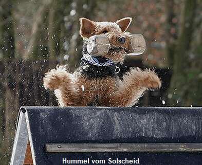 a_Hummel_vom_Solscheid1
