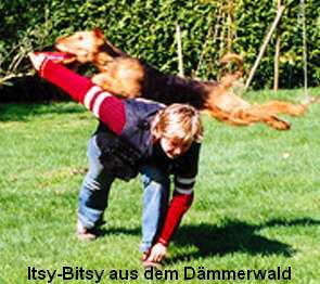 a_Itsy-Bitsy_aus_dem_Dammerwald1