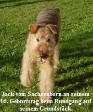 a_Jack_Sachsenborn16