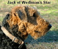 a_Jack_Wedimans_Star3