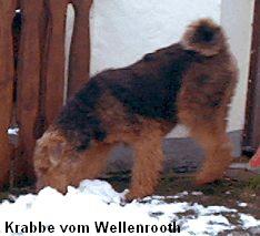 a_Krabbe-Wellenrooth