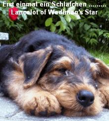 a_Lancelot_Wedimans_Star