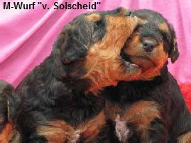 a_M-Wurf_Solscheid