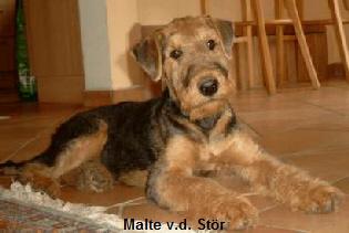 a_Malte_St_r