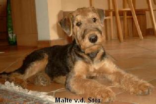 a_Malte_Stor