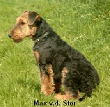 a_Max_Stor