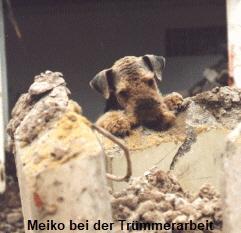 a_MeikoArgonaut10