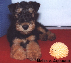 a_MeikoArgonaut16