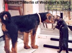 a_Merlin_Wedimans_Star