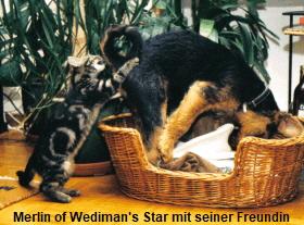 a_Merlin_Wedimans_Star_Katze