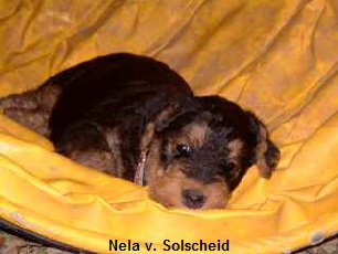 a_Nela_Solscheid