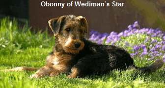 a_Obonny_Wedimans_Star1