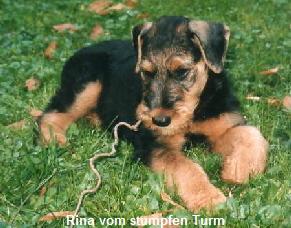 a_Rina_stumpferTurm1