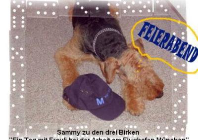 a_Sammy_dreiBirken1