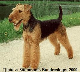 a_Tjinta_Stammhof